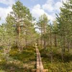 Na szlaku drewnianą kładką przez Viru raba