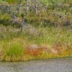 Charakterystycznym krajobrazem w Lahemaa są kolorowe obrazy malowane przez rude trawy porastające torf, mchy i porosty