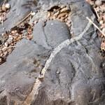 Różnorodność głazów i kamieni