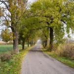 Od wsi do wsi prowadził wąski i pozbawiony ruchu samochodowego asfalcik
