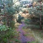 W lesie znaleźliśmy asfaltową dróżkę, szkoda, że nie jest alternatywą do piaszczystego szlaku