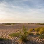 Widok na miejsca lęgowe w rezerwacie