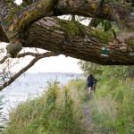 Od portu rybackiego w Świbno do rezerwatu wzdłuż Przekopu Wisły prowadzi szlak łącznikowy