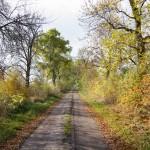 Droga Przylepki – Manieczki