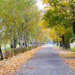 Droga w Manieczkach