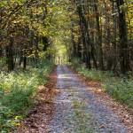 Brukowana droga Lipówka – Brześnica