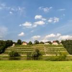 Winnice na zboczach Loschwitz