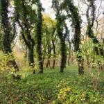 Konarzewo. Zaniedbany i zdziczały park