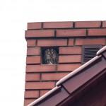 Sowa w kominie naszej kwatery