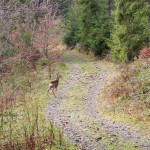 W drodze na polanę pod Opuśniokiem