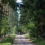 Przez las w drodze do Dominikowa