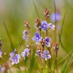 Kwiatki na łące