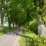 Kierunek Piaseczno
