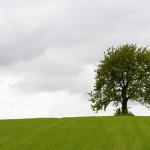 Samotne w polu