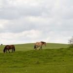 Przytoń. Konie