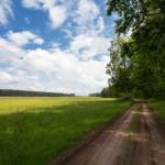 Na szlaku z Nowinek do Grzybna
