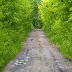 W drodze do Piotrowa