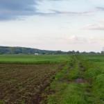 Ja jednak skracam drogę przez łąki do Starego Dymaczewa