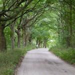 Starą aleją przez rezerwat Miranowo