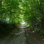 WPN – zielony tunel