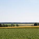 W dolinie kanał Olszynka