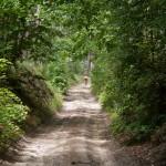 Droga w wąwozie. Okolice leśniczówki Kosek