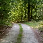 Na szlaku wzdłuż j. Lubniewsko