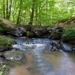 Czerwony Potok. Nazwa pochodzi od zabarwień wody potoku liśćmi bukowymi