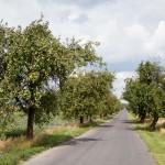 Droga obsadzona jabłonkami