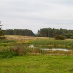 Krajobraz w okolicach wsi Brzeźniak