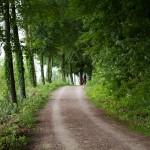 W Wallhausen szlak rowerowy gdzieś przepadł. Jedziemy do Dettingen do piekarni na kawę i ciacho