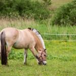 Koń jaki jest każdy widzi, ten ma fajną grzywkę :)