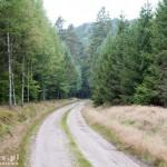 Droga leśna kierunek Grabowo