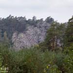 Białe drzewa od odchodów kormoranów