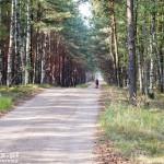Szlak rowerowy przez puszczę. Kierunek Mężyk