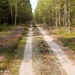 Długa prosta ok 6 km