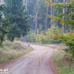 Jedziemy przez lasy na Wołowe Lasy