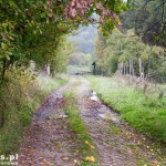 Stara brukowana droga na Moczele