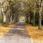 Droga cały czas prowadzi w tunelu z drzew