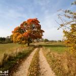 Świetna droga przez pola na Toporzyk