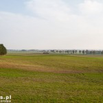 Nasadzenia wzdłuż drogi do Bronikowa. A gdzie żubry?