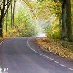 Piękna jesień w drodze na Sądów.