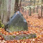 Emil Meyer – leśnik, który zginął tragicznie