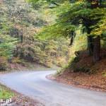 Droga na Głusko