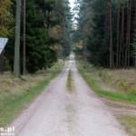 Na Wołowe Lasy. Dopuszczony ruch samochodowy przez las