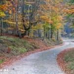 Brukowane drogi przed Niekurskiem