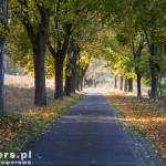 Stara droga prowadząca do podziemnych koszar w Strzalinach