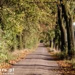 Przez las do Nochowa