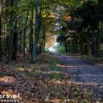 Gdzieś w lesie na szlaku rowerowym Śladami J. Wybickiego