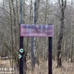 Rezerwat przyrody Czarnocin. Podmokły teren daje schronienie wielu zwierzętom
